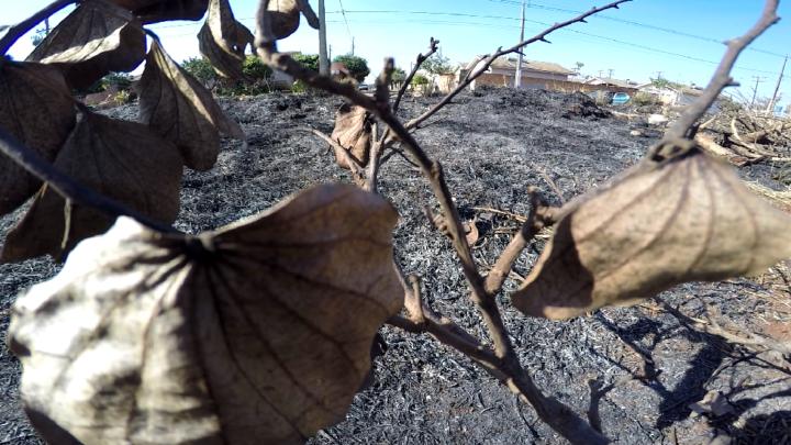 Incêndios ambientais criminosos aumentam em Campo Mourão