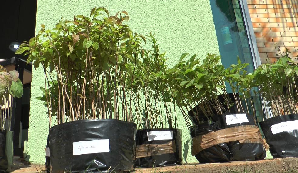 IAT promove troca de mudas de árvores por ração para animais