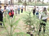 Plantio de Araucárias no Parque do Lago homenageia servidores